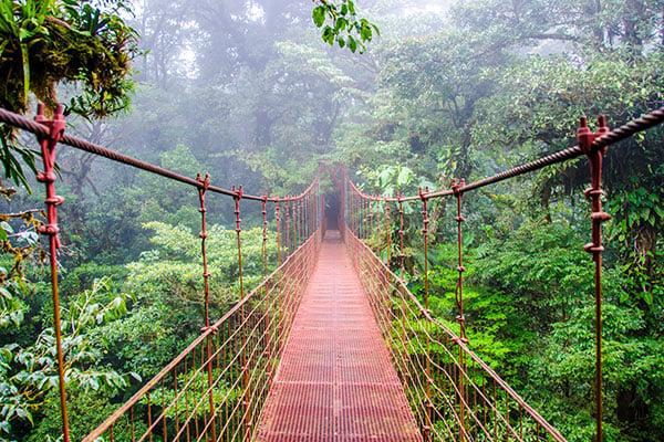 ymt-blog-costa-rica-rainforest-travel-guide-monteverde-cloud-forest