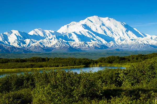 ymt-blog-national-parks-with-the-best-wildlife-viewing-denali-national-park