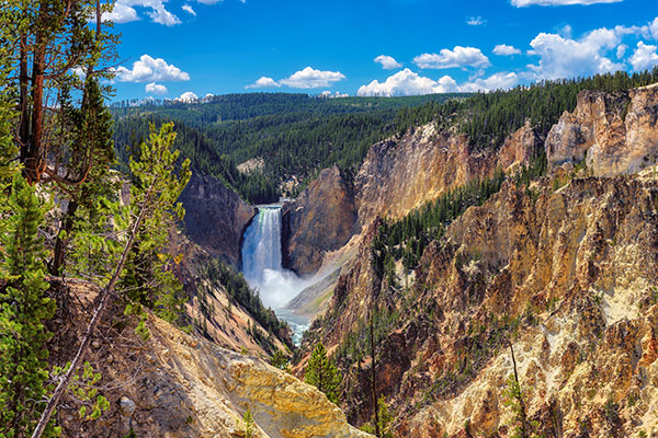 ymt-blog-national-parks-with-the-best-wildlife-viewing-yellowstone