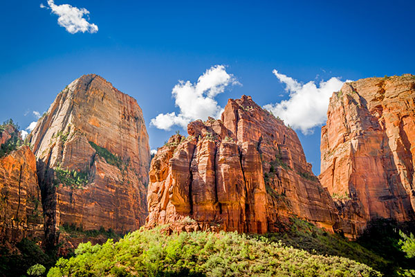ymt-blog-national-parks-with-the-best-wildlife-viewing-zion