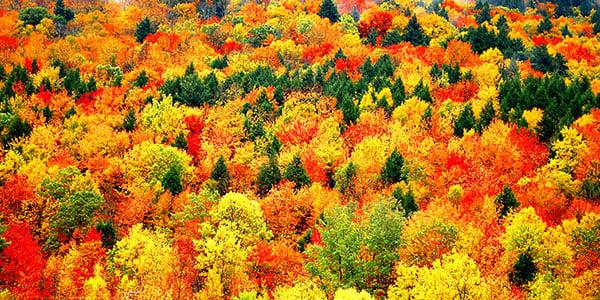Autumn-leaves-New England-Fall- Foliage-Header-ALTR