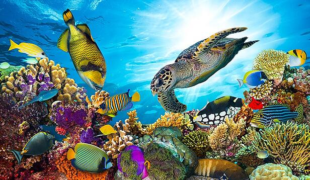 Is A Great Barrier Reef Dive Right for You?: Tips for Australia's Greatest Wonder