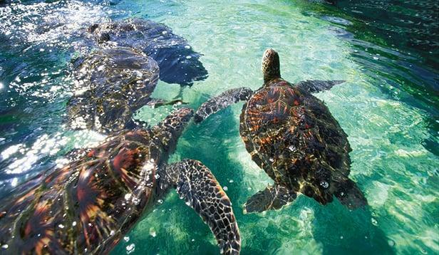 Sea turtles.png