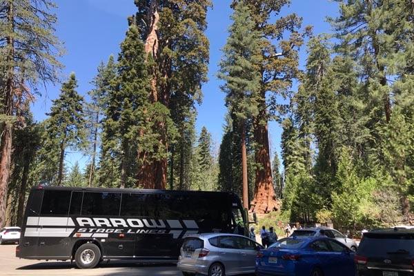YMT Tour Bus at Sequoia National Park Golden California Tour