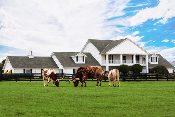 Ymt-Vacations-Southfork-Ranch-with-Longhorns