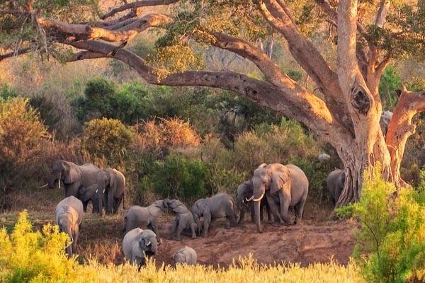 elephant-South-Africa