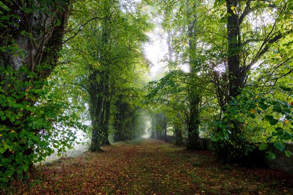 forest-in-ireland-iStock-1130397615