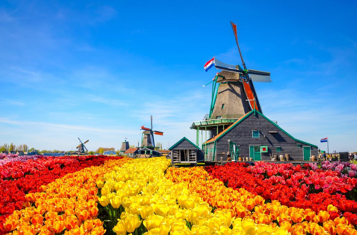 Rhine River Cruise in Tulip Season with YMT Vacations